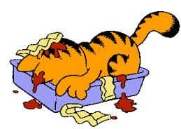 cat in lasagna dish