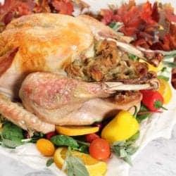 Roasted Thanksgiving Turkey 1 square
