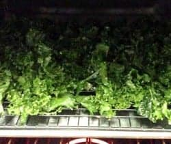 Cheesy Kale Chips in oven
