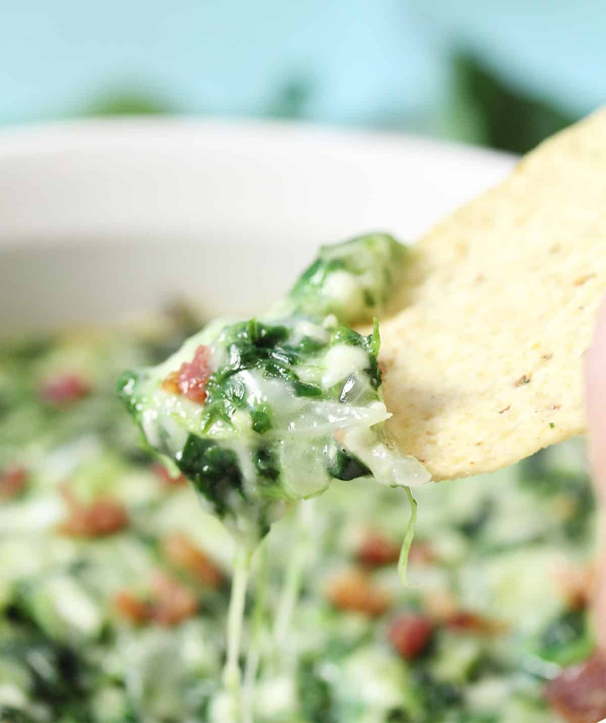Closeup of scoop of spinach dip on tortilla chip.