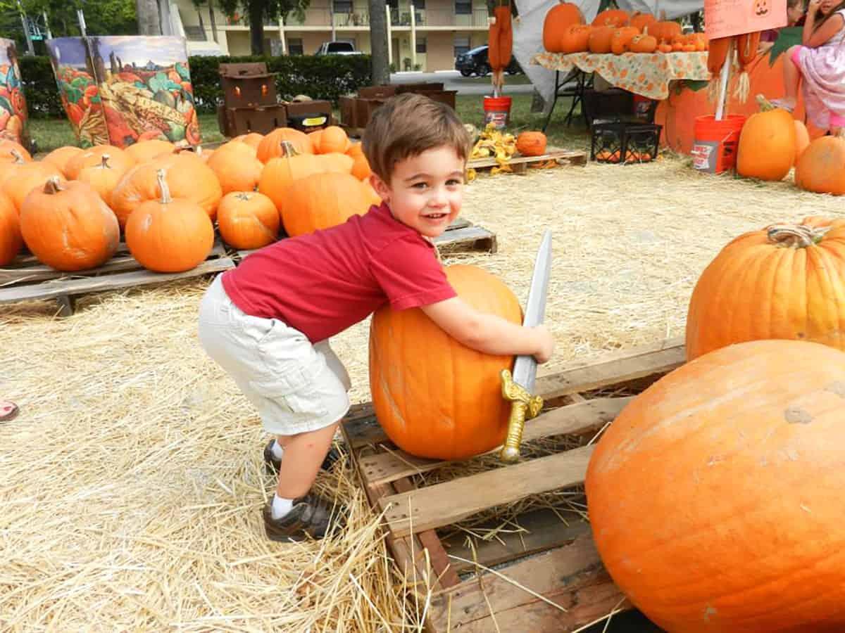 Showing small boy in pumpkin patch choosing pumpkin.